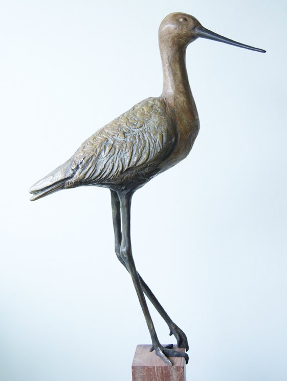 Black-tailed godwit, bronze, 60cm h, edition 8