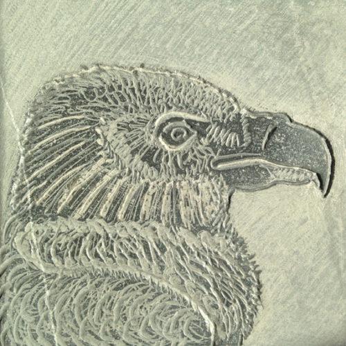 Vale gier, tekening in steen, beschikbaar