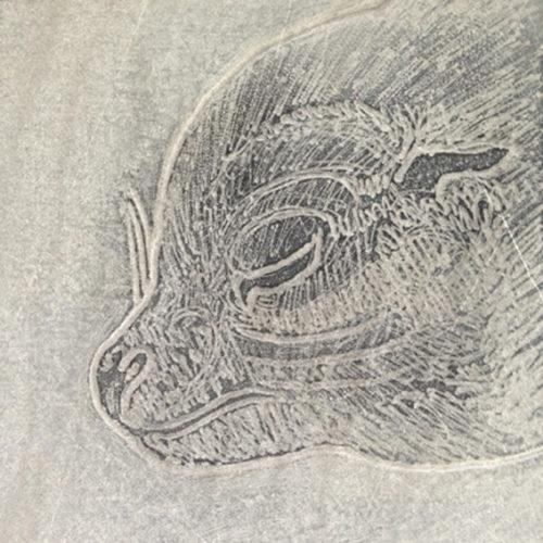Zeehond, tekening in steen, beschikbaar